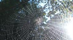 Wie reagieren Sie, wenn Sie eine Spinne sehen?
