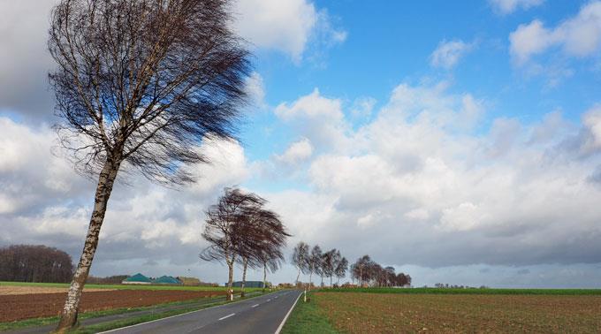 Bäume im Wind - ein Generator-Vorbild.